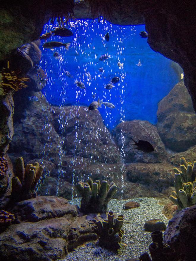 Sochi Discovery World Aquarium в Адлере
