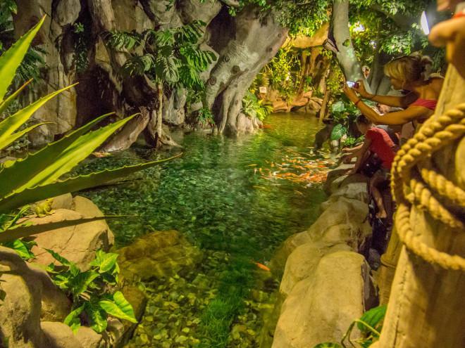 сочинский аквариум
