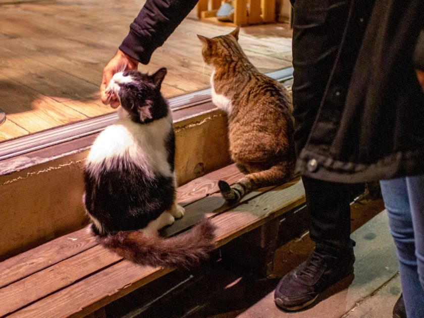 Коты в Стамбуле