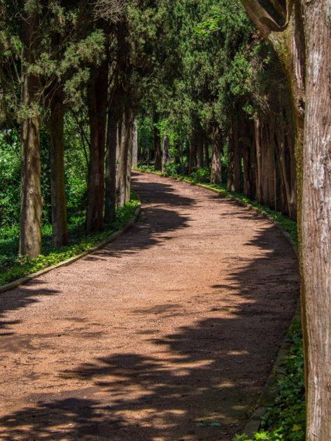 аллеи ботанического сада в Никите
